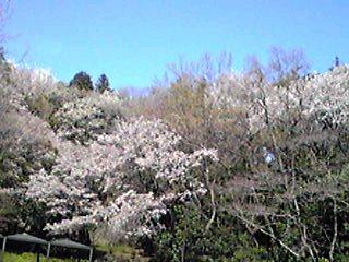 今日の直さん(高橋直純)小倉にてボイブー祭りのイベント最終日です!そしてOTODAMA空フェスのチケット