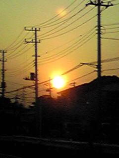 大きな夕日と萎まないヒルガオ(昼顔)