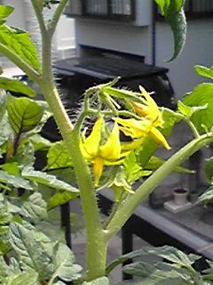 野菜たちの花