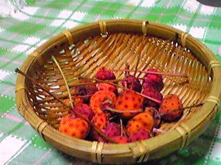 ヤマボウシ(山法師)の甘い実を知っていますか?