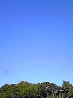今日の秋空秋景色(ハナミズキの実)