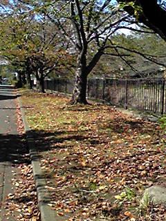 今日も秋空散歩♪