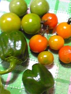 まだ有ったんですよ!家庭菜園に残っていたミニトマトとピーマン♪