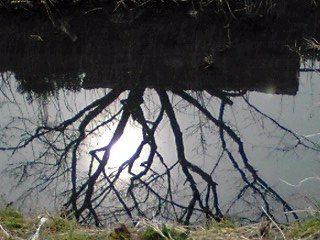 水面に映る芽吹き始めた桜の木と月の様な太陽