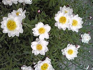 花かんざしは可愛いですね〜!?