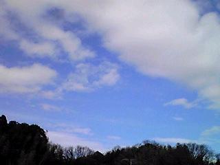 嵐の前?の今日の空と樹木…そこには?