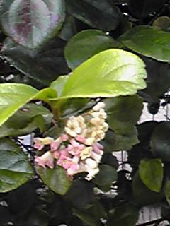 この花の名はわかりませんが…