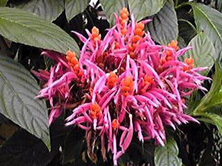 大船のフラワーセンターの温室で咲いている花たち①