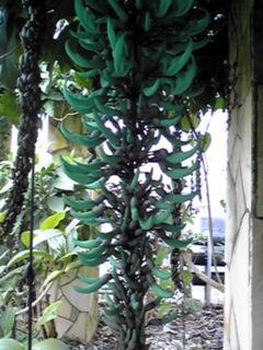 まだまだ有りますよ!大船フラワーセンターの温室で咲く花たち③