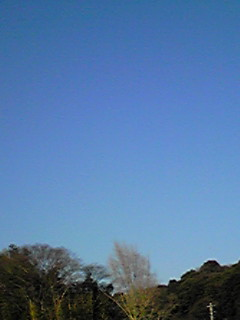 青空の下、午後4時からの散歩(ミント姫)