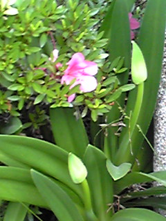 梅雨を感じられる花たちもそろそろ…