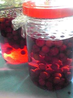 ヤマモモ(山桃)は真っ赤なお酒に!そしてクランベリーは花から実へ♪