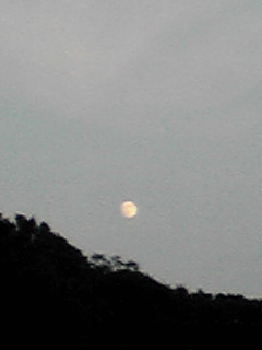 今夜のお月様とアガパンサスの観覧車