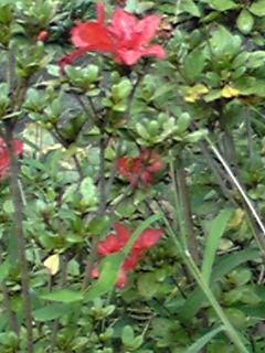多いですね〜?、季節外れの花たち