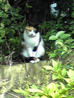 ザ・三毛猫