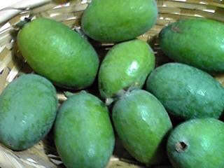 今年はパイナップルグァバ(フェイジョア、フィジョア)が収穫出来ました♪