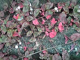 紅葉いろいろ