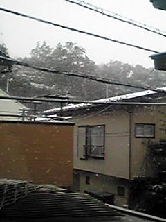 やっぱり初雪に成りましたね!