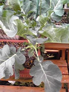 今のわが家の家庭菜園は…