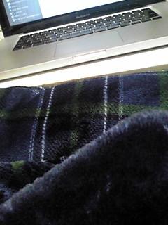 コタツ布団と毛布を新しくしたら…www