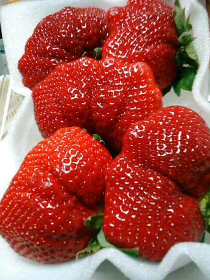 昨日はイチゴの日と言うことでイチゴ買って来て食べました~!