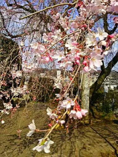 早めに2017年4月の直さん(高橋直純)参りましょう!(*^▽^)/★*☆♪(直祭り~♪)いちご☆イチゴ♪