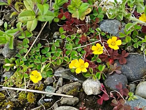 雑草と呼ばれる花たち色々・・・春