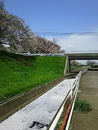 まだまだ楽しめた長い桜並木と桜吹雪