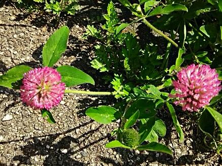 野の花・・・春色♪