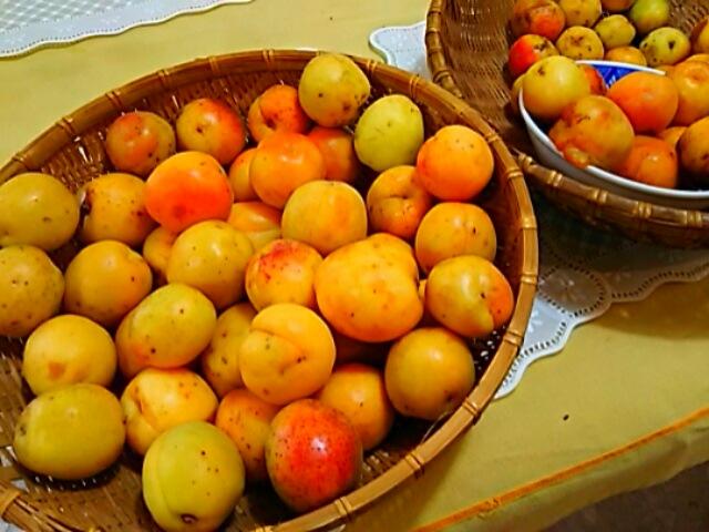 あんず(杏子)を収穫させて頂きまジャムを作りました~♪