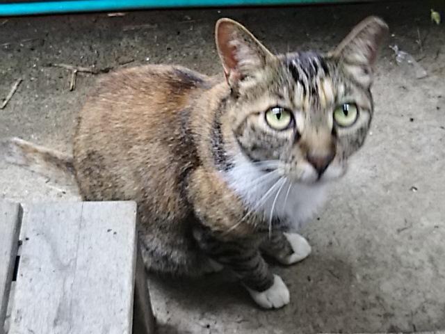 よく来る野良猫さん、王妃とは仲良しです!