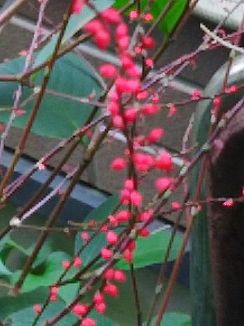 ミズヒキ(水引)の花も実も小さくて・・・(^-^)