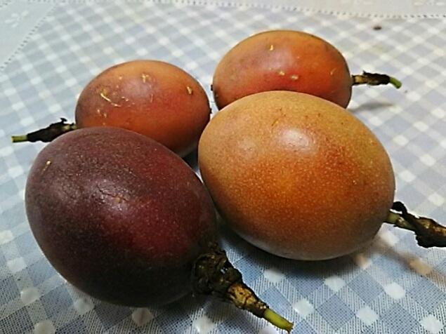 パッションフルーツ(くだものとけいそう)一つ目の鉢から今年は沢山の実が採れました!
