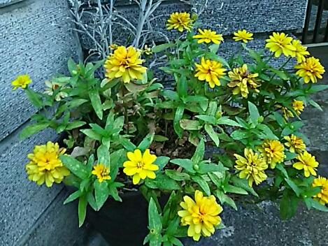 園芸種も多いから名前の分からない花も在りますが何とも綺麗です♪