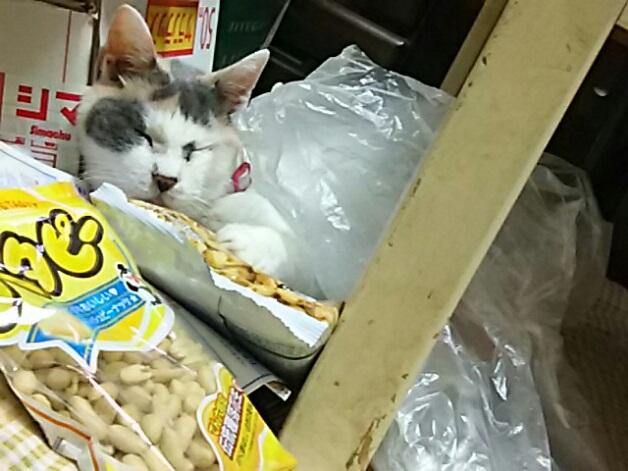 お菓子抱えてポリ袋掛けておやすみ中~!(ニャー姫)