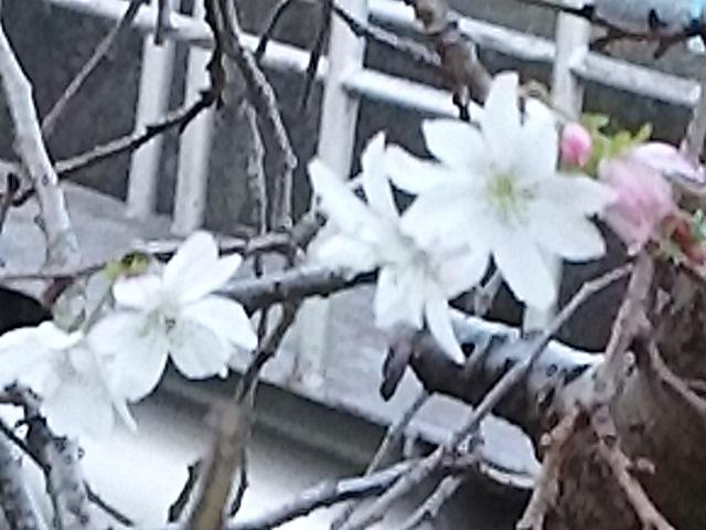 今日の直さん(高橋直純)は京都はアニメイト京都にてDVD発売記念イベントツアー「一期一会」開催です!&新しいお知らせも!!