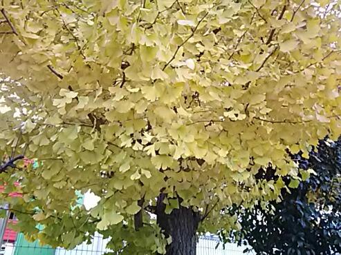 紅葉の色、鮮やか‼