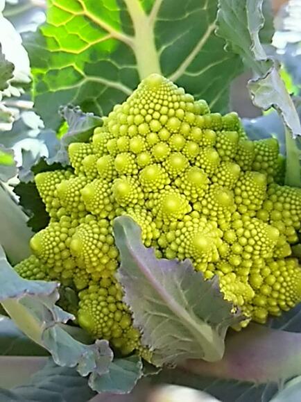 苗から育てた野菜もちょっと小さめ。。。でも美味しいよ♪
