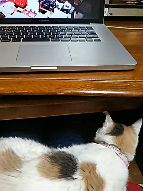 二階のパソコンデスクに座ると必ず此処に!(にゃー姫)