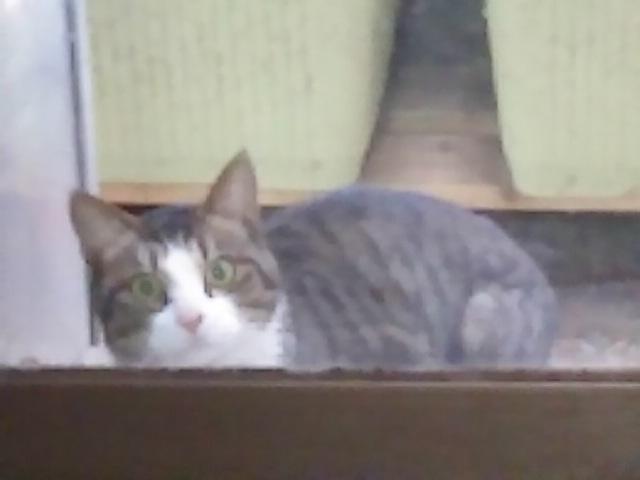 あれ?新顔の野良猫さんかな?
