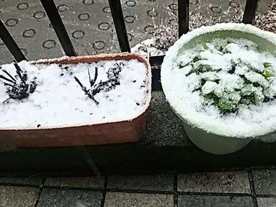 春分の日は雪が積もるほどのお天気でした!