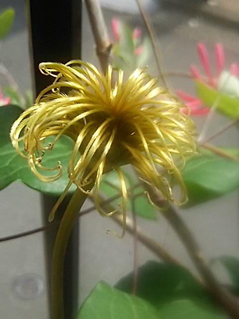 えっ!金色の花?
