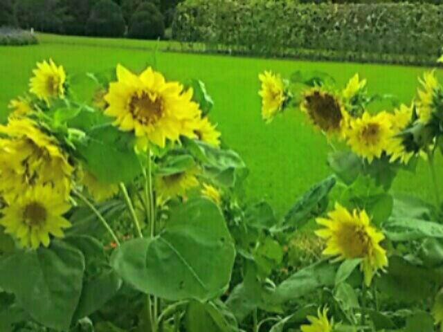さあ、今日の直さん(高橋直純)エメロウスツアーは仙台にて7公演目(セミファイル)です!明日は発売記念のイベントも有りますよ~♪