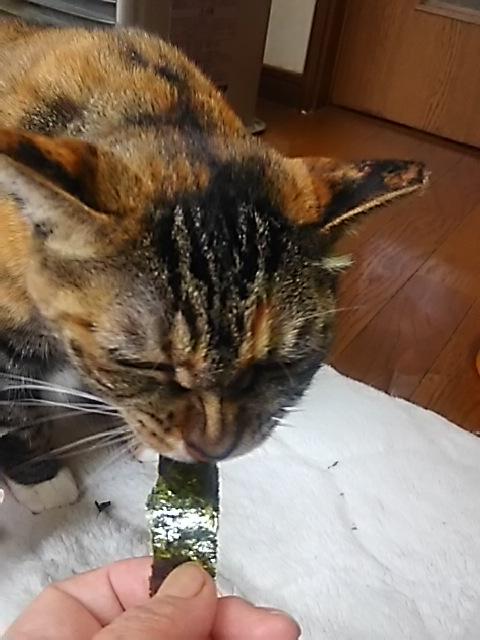 猫って海苔好きなの?