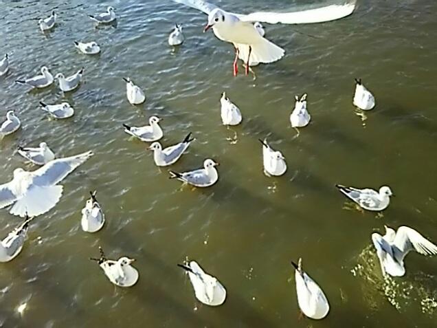 羽ばたく水鳥の姿