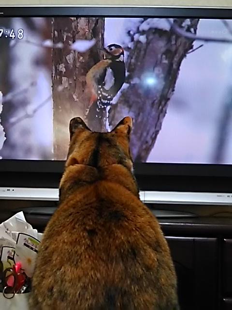 たび子さんはNHKの「さわやか自然百景」の大ファンです!