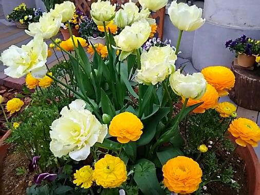 ラナンキュラスの可愛い花と共に直さん(高橋直純)の嬉しいお知らせ参りますよ!